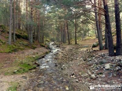 Bosque de Finlandia - Valle de El Paular;viajes de la comunidad de madrid senderismo con gps gredos